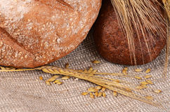 Φρέσκο ψωμί με τα αυτιά μια σίκαλη στοκ εικόνα με δικαίωμα ελεύθερης χρήσης