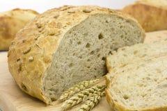 Φρέσκο ψωμί στοκ εικόνα