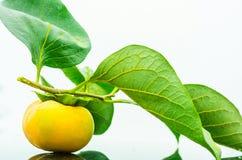 Φρέσκο ώριμο persimmon με τον κλάδο και φύλλα που απομονώνονται στο άσπρο υπόβαθρο Στοκ φωτογραφίες με δικαίωμα ελεύθερης χρήσης