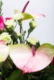 Φρέσκο anthurium λουλούδι Στοκ Εικόνες