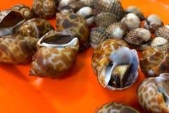 Φρέσκο areolata Babylonia που πωλείται στο κατάστημα shabu στοκ φωτογραφίες με δικαίωμα ελεύθερης χρήσης