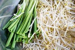 Φρέσκο beansprout Στοκ Φωτογραφίες