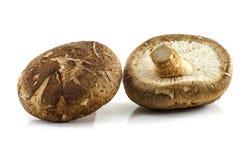 Φρέσκο champignon μανιταριών στοκ εικόνες