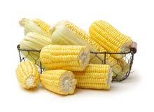 Φρέσκο corncob στοκ εικόνα