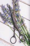 Φρέσκο laveder Στοκ εικόνες με δικαίωμα ελεύθερης χρήσης