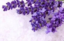 φρέσκο lavender στοκ φωτογραφίες με δικαίωμα ελεύθερης χρήσης