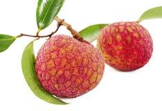φρέσκο lychees λευκό στοκ φωτογραφία με δικαίωμα ελεύθερης χρήσης