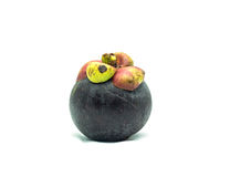 φρέσκο mangosteen Στοκ Εικόνες