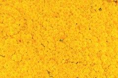 Φρέσκο marigold υπόβαθρο λουλουδιών Στοκ Εικόνες