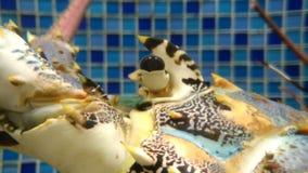 Φρέσκο & yummy αυγό tartslobster στενό σε έναν επάνω δεξαμενών απόθεμα βίντεο
