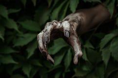 Φρίκη και θέμα αποκριών: το φοβερό βρώμικο χέρι με τα μαύρα νύχια zombie σέρνεται από τα πράσινα φύλλα, περπατώντας τη νεκρή αποκ στοκ εικόνα με δικαίωμα ελεύθερης χρήσης