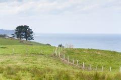 Φραγές και δέντρα από τη θάλασσα και το νεφελώδη ουρανό στοκ εικόνα με δικαίωμα ελεύθερης χρήσης