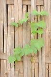 Φραγές και φύλλα μπαμπού Στοκ φωτογραφία με δικαίωμα ελεύθερης χρήσης