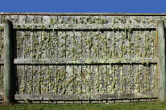 φραγή mossy πολύ στοκ φωτογραφία με δικαίωμα ελεύθερης χρήσης