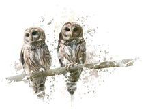 Φραγμένες κουκουβάγιες Watercolor Στοκ φωτογραφία με δικαίωμα ελεύθερης χρήσης