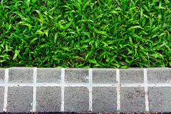 Φραγμοί κήπων Στοκ Φωτογραφίες