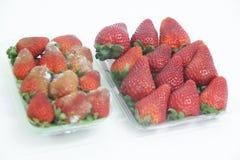 Φραουλών εύγευστα υγιεινά φρούτα Σάο Πάολο Βραζιλία φορμών τροφίμων απομονωμένα γεωργία στοκ φωτογραφία