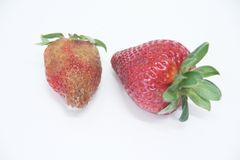 Φραουλών εύγευστα υγιεινά φρούτα Σάο Πάολο Βραζιλία φορμών τροφίμων απομονωμένα γεωργία στοκ εικόνες