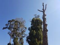 φροντίδα για τα δέντρα για το καθαρό αέρα στοκ φωτογραφία με δικαίωμα ελεύθερης χρήσης