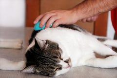 Φροντίδα για τη γούνα γατών Χέρι που κτενίζει από τη γάτα χτενών Τρίχα βουρτσίσματος ατόμων και χτένα γουνών βουρτσών της γάτας σ στοκ φωτογραφία με δικαίωμα ελεύθερης χρήσης