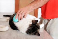 Φροντίδα για τη γούνα γατών Χέρι που κτενίζει από τη γάτα χτενών Τρίχα βουρτσίσματος ατόμων και χτένα γουνών βουρτσών της γάτας σ στοκ φωτογραφίες