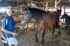 Φροντισμένος για τα άλογα Στοκ Εικόνες