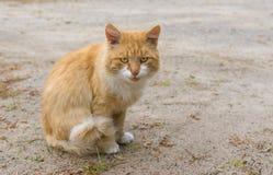Φρουρημένη γάτα στοκ εικόνα με δικαίωμα ελεύθερης χρήσης