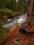 Φρουρός Creekside Στοκ φωτογραφία με δικαίωμα ελεύθερης χρήσης