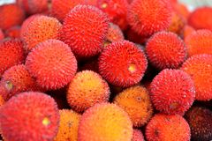 Φρούτα δέντρων φραουλών Arbutus Unedo Στοκ Φωτογραφία