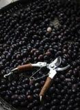 Φρούτα αγκαθιών Χριστού σε πιό pannier στοκ φωτογραφίες