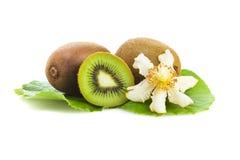 Φρούτα ακτινίδιων με το άνθος στα φύλλα τους Στοκ Εικόνα