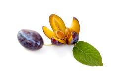 Φρούτα δαμάσκηνων μέσα και έξω στοκ εικόνες