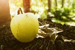 Φρούτα αχλαδιών, νωποί καρποί, υγιή τρόφιμα, υπόβαθρο Bokeh στοκ φωτογραφίες