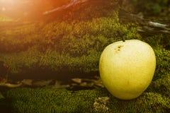 Φρούτα αχλαδιών, νωποί καρποί, υγιή τρόφιμα, υπόβαθρο Bokeh στοκ εικόνες