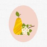 Φρούτα αχλαδιών και άνοιξη ανθών λουλουδιών υγιής Στοκ Εικόνα