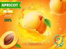 Φρούτα βερίκοκων στην αφίσα διαφήμισης παφλασμών χυμού Στοκ εικόνες με δικαίωμα ελεύθερης χρήσης
