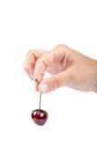 Φρούτα γλυκών κερασιών στο θηλυκό χέρι Στοκ Εικόνες