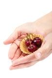 Φρούτα γλυκών κερασιών στο θηλυκό χέρι Στοκ Φωτογραφίες
