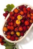 Φρούτα δέντρων φραουλών (Arbutus Unedo) Στοκ εικόνες με δικαίωμα ελεύθερης χρήσης