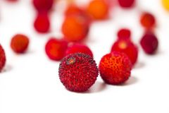 Φρούτα δέντρων φραουλών (Arbutus Unedo) Στοκ Φωτογραφίες