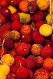 Φρούτα δέντρων φραουλών (Arbutus Unedo) Στοκ εικόνα με δικαίωμα ελεύθερης χρήσης