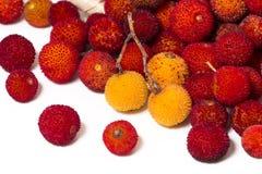 Φρούτα δέντρων φραουλών (Arbutus Unedo) Στοκ Εικόνες