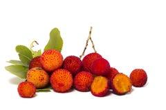 Φρούτα δέντρων φραουλών (Arbutus Unedo) Στοκ φωτογραφίες με δικαίωμα ελεύθερης χρήσης