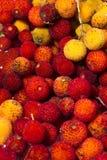 Φρούτα δέντρων φραουλών (Arbutus Unedo) Στοκ Εικόνα