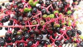Φρούτα επιλογής ginseng φιλμ μικρού μήκους