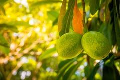 Φρούτα ζεύγους Στοκ Εικόνα