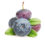 Φρούτα θερινών μούρων Στοκ Φωτογραφία