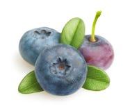 Φρούτα θερινών μούρων Στοκ φωτογραφία με δικαίωμα ελεύθερης χρήσης