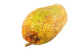 Φρούτα ΙΙΙ Cempedak Στοκ Εικόνες
