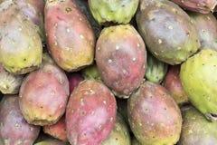 Φρούτα κάκτων, Opuntia ficus-Indica, ινδικό opuntia σύκων, σύκο Βαρβαρίας, τραχύ αχλάδι) ή τόνος Στοκ Εικόνα